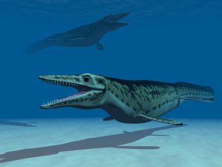 Mosasaurs were huge marine reptiles that ruled the seas during the dinosaur age. Shown here, a generic illustration of a mosasaur.