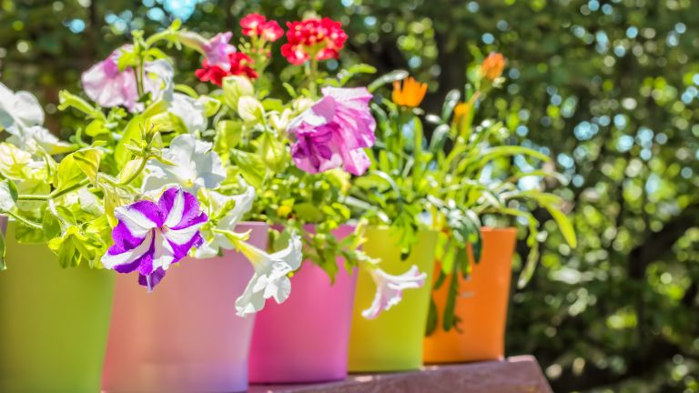 care tips for summer containers planted with summer bedding plants