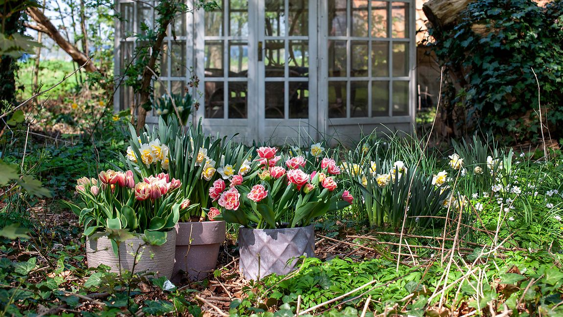 5 brilliant bulb planting ideas you can try this weekend