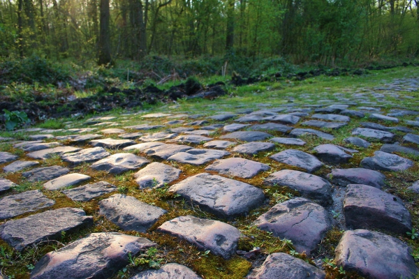 Cobbles in the Arenberg forest, Paris-Roubaix 2014