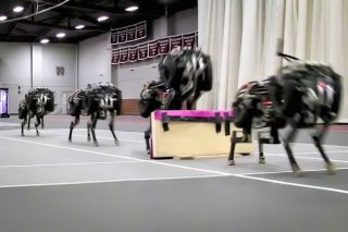 MIT's cheetah robot clears a hurdle.