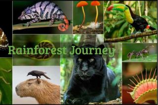 Class Tech Tips: Life Science Curriculum: Rainforest Journey from EdTechLens