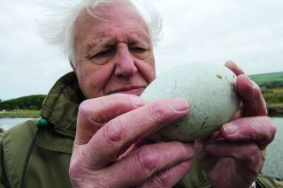 So familiar yet so remarkable, the bird's egg is strong enough to bear the load of a parent sitting on it and fragile enough to enable a weak chick to break out.