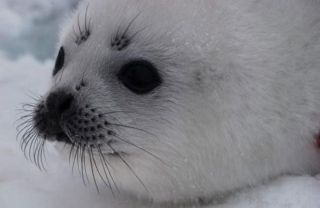 cute-sea-creatures-album-sealpup-101011