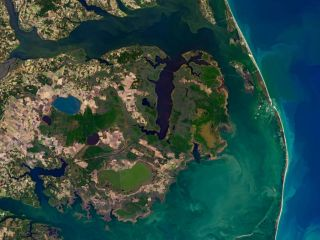 Ghost forests (gray patches of dead trees) are becoming so prevalent in North Carolina they are visible from space.