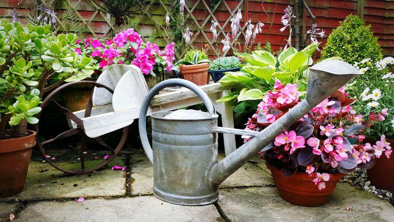 metal watering can in garden