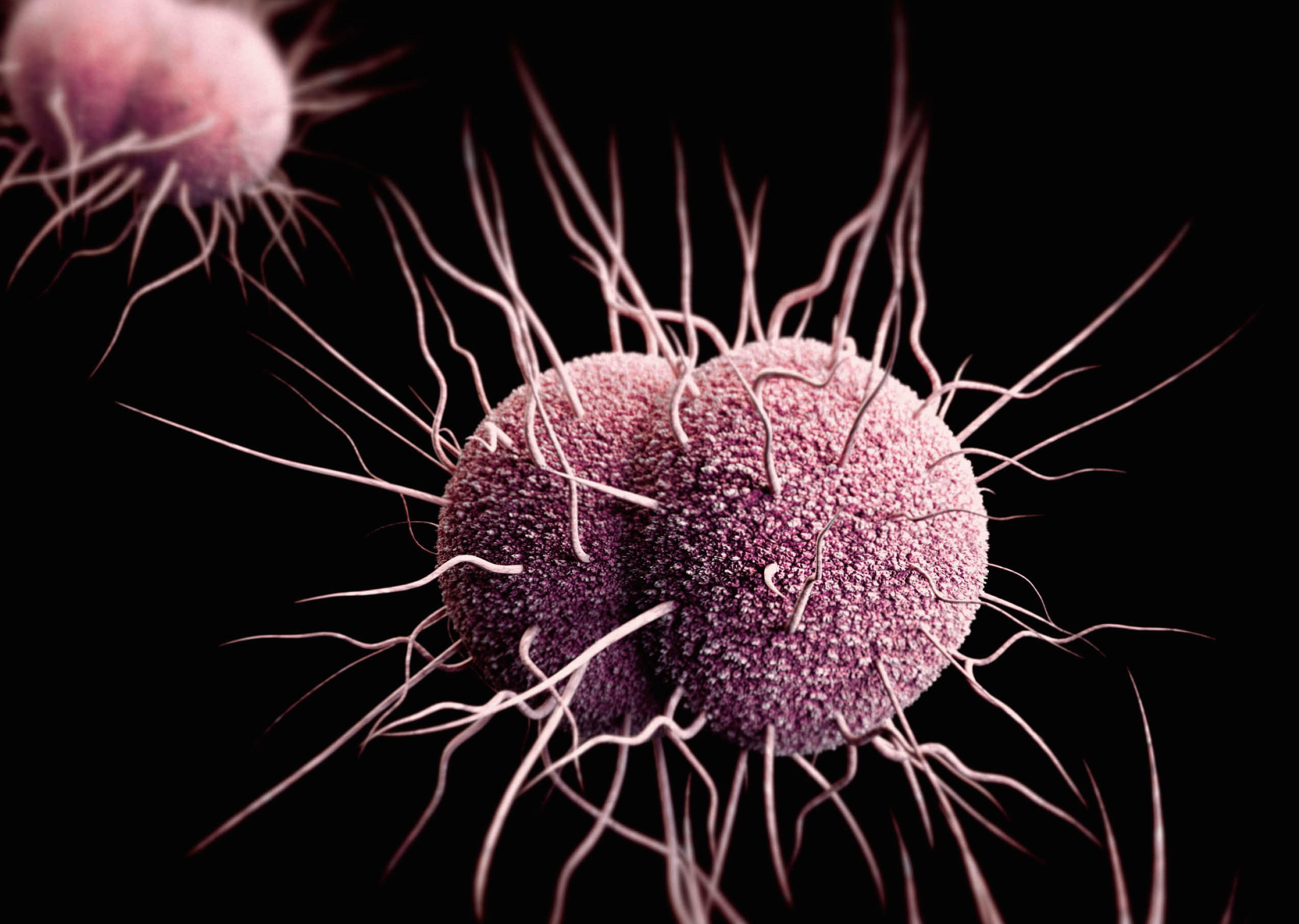 Gonorrhea: Symptoms & Treatment | Live Science