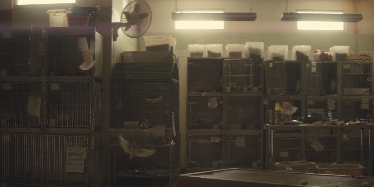 The doves from Stuber's shootout