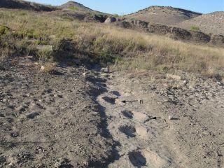 Dinosaur track slip