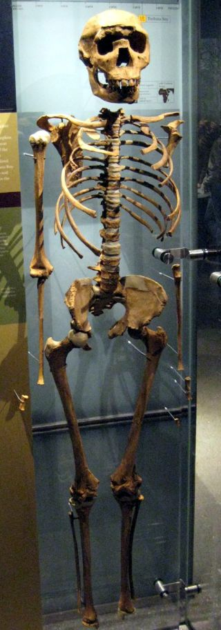 Turkana Boy skeleton reveals no bone disorder