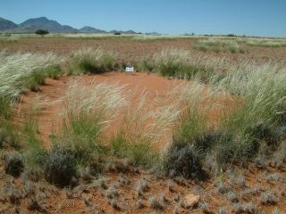 Fairy circles in the Namib Desert in Africa.