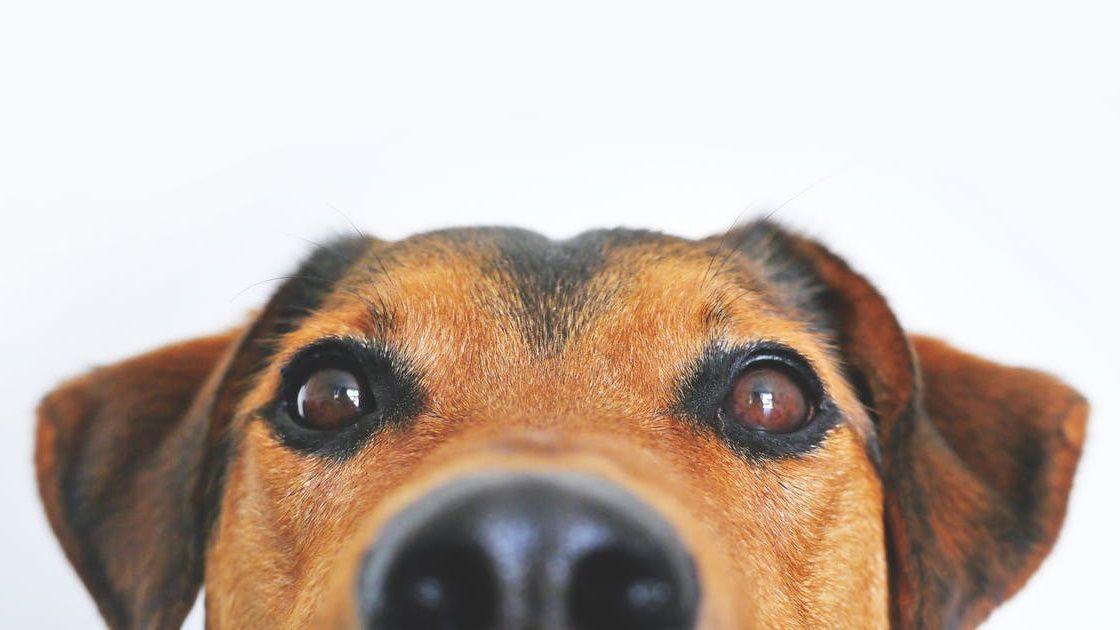 The online pet stores still delivering