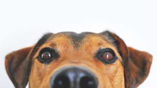 where to buy pet food online delivery