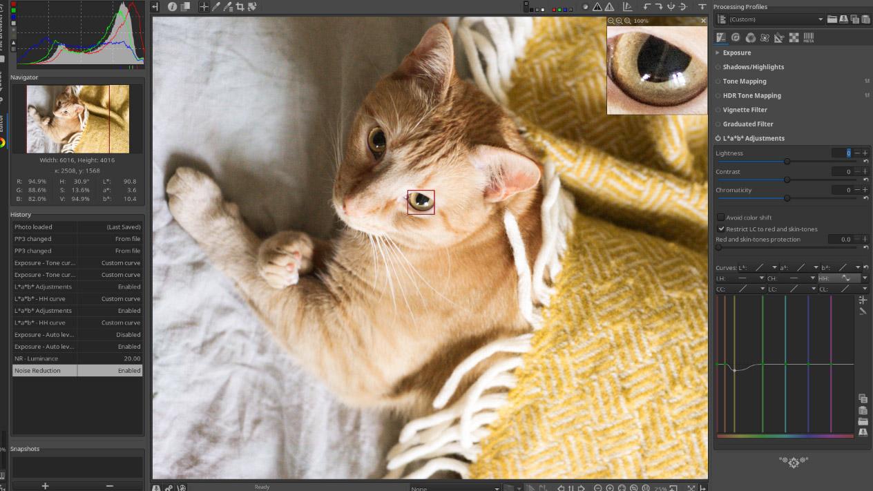 RawTherapee image of a cat