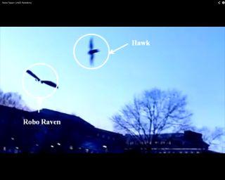 robo-raven