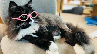 Truffles the cat lying down on a chair wearing pink glasses