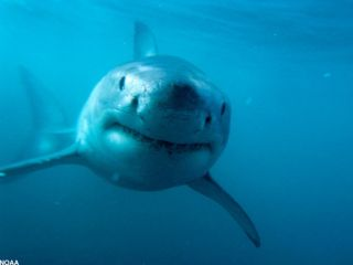 There are more shark attacks in U.S. waters than in any other region of the world.