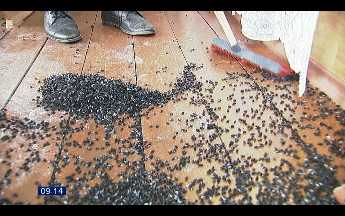 Terrifying 'Fly-Pocalypse' Descends Upon Russian Village