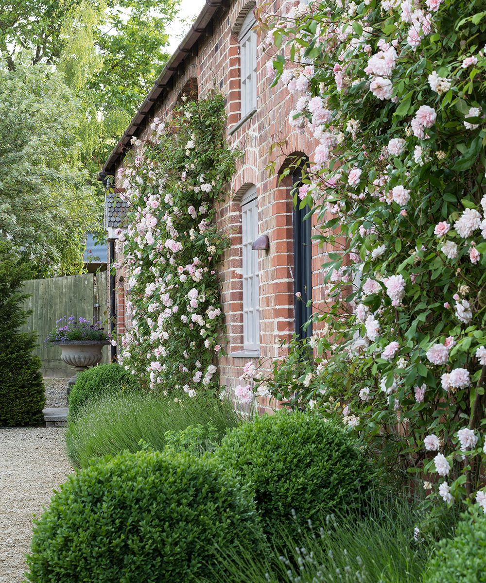 How to look after roses – with tips from a National Trust gardening expert