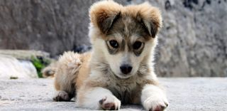 dogs, domesticated animals, cute animals