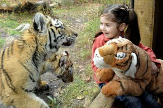 children, zoos, aquarium