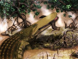 Shield croc lived during the age of the dinosaurs.