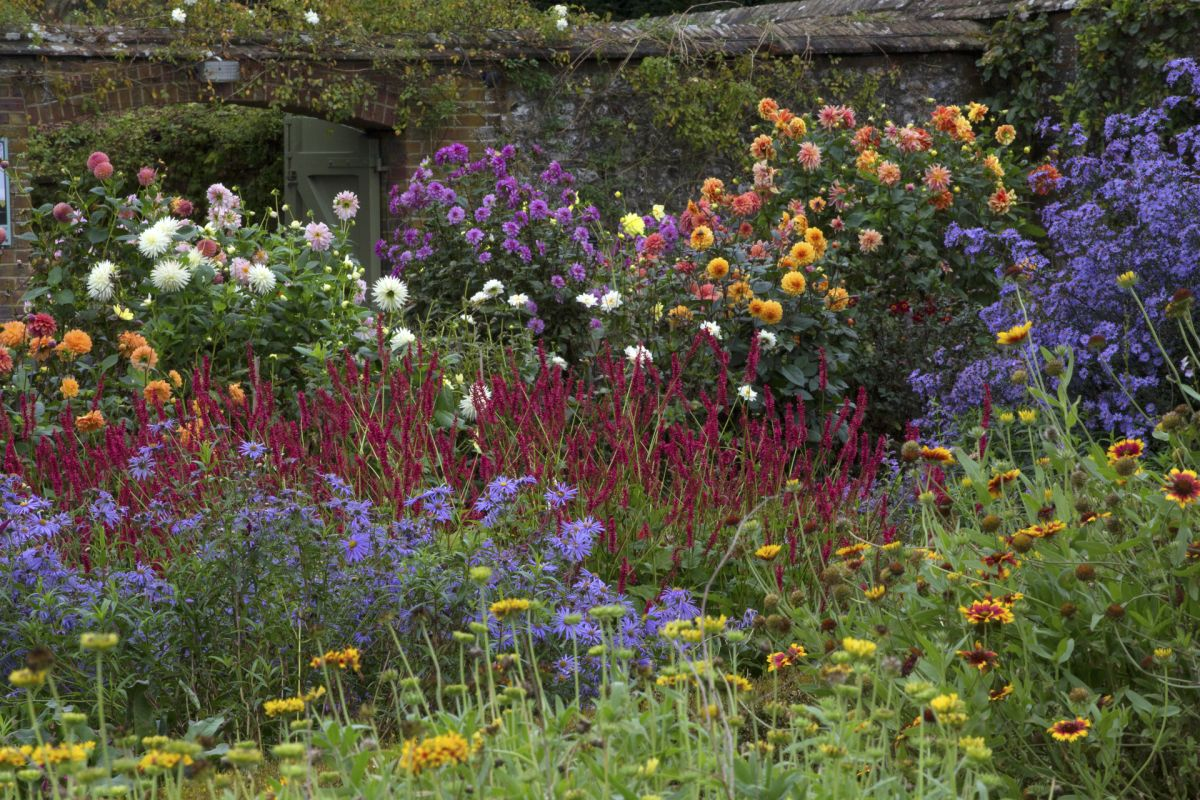 Monty Don reveals his dahlia tuber planting tips – for a colorful display
