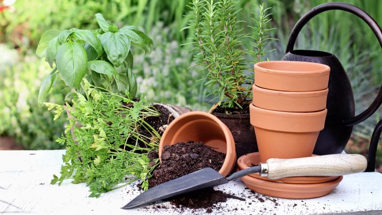 herb garden ideas: terracotta plant pots ready to be planted up with garden herbs