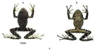 Zep frogs