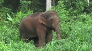 elephant-screen-grab-101222