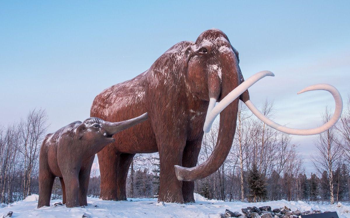 Mammoth Resurrection: 11 Hurdles to Bringing Back an Ice Age Beast