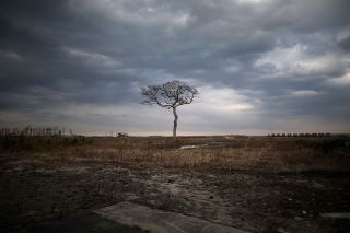 A lone tree stands on the tsunami-scarred landscape, inside the exclusion zone, close to the devastated Fukushima Daiichi Nuclear Power Plant, shown on Feb. 26, 2016.
