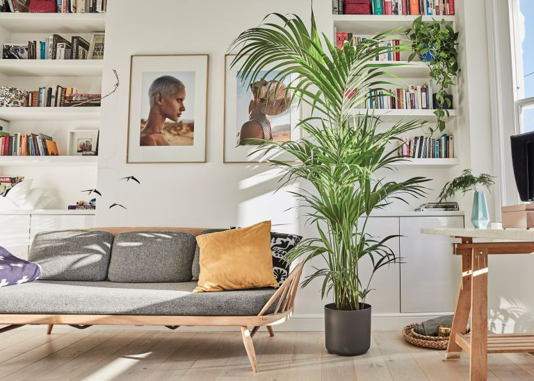 best indoor plants: large green house plant in a white modern living room