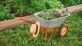How to kill weeds in your lawn and garden: A wheelbarrow full of weeds