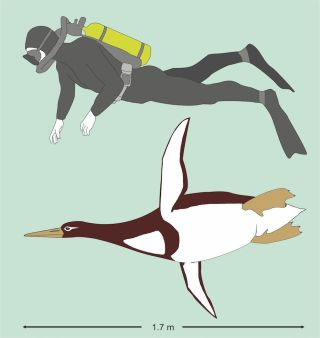 Giant penguin illustration