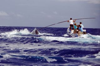 humpback whale tag