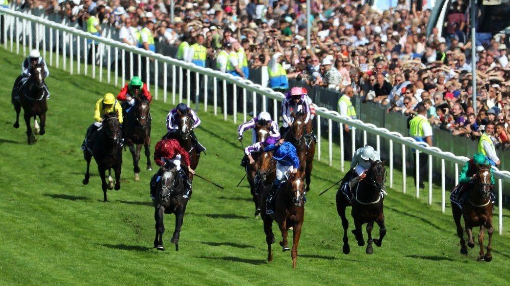 Live Stream Horse Racing