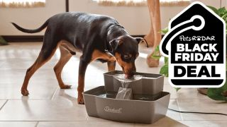 Dog drinking from PetSafe Drinkwell Multi-Tier Cat and Dog Water Fountain