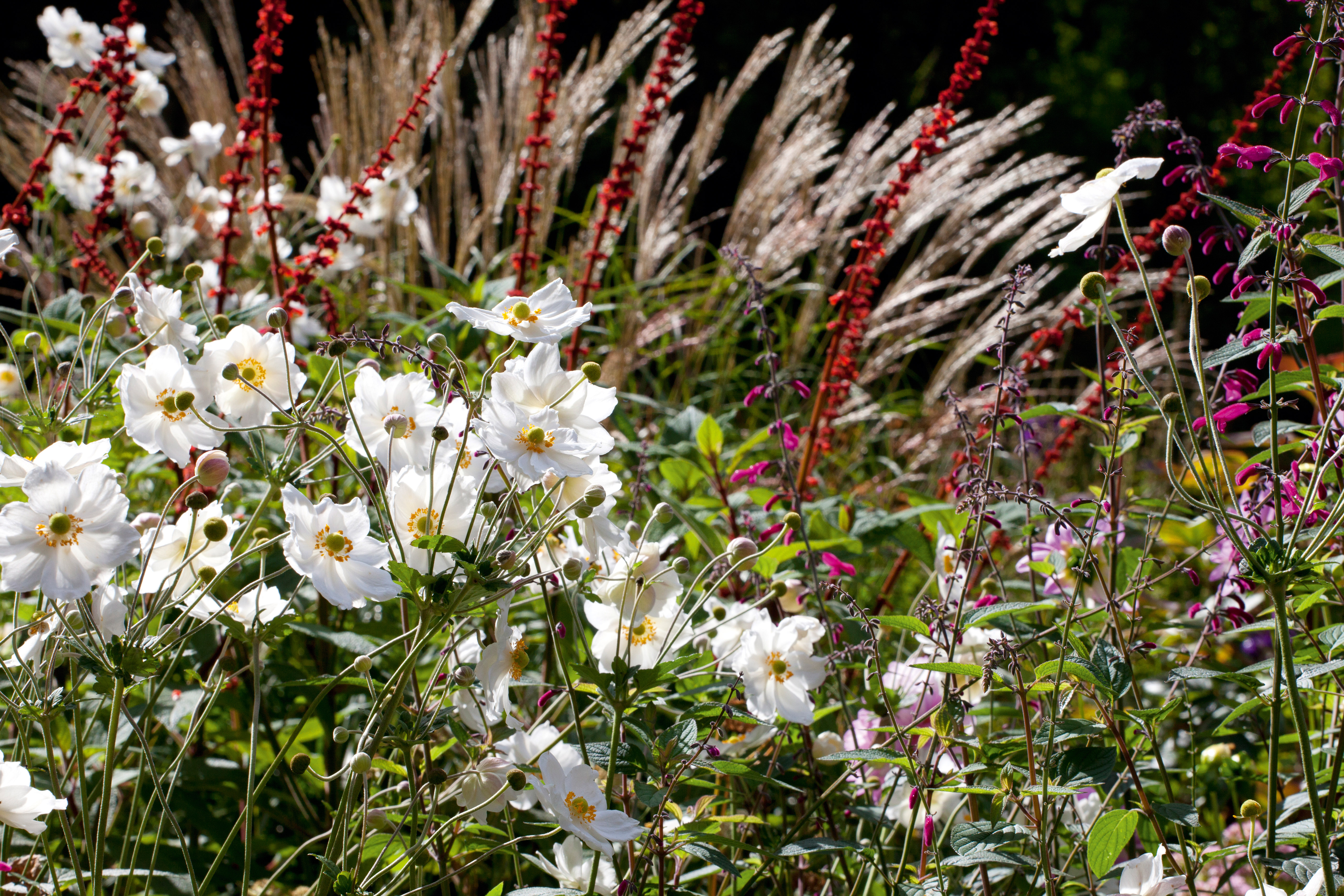 Garden Borders 24 Ideas For Planting Schemes Real Homes