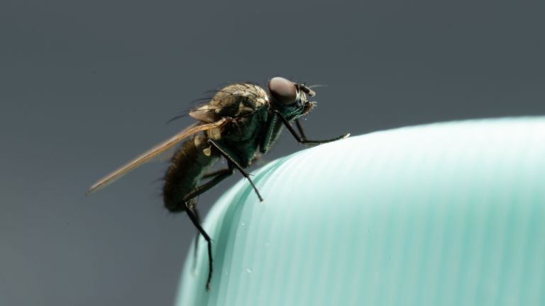 how to get rid of flying insects in your home - a fly on a green vase - GettyImages