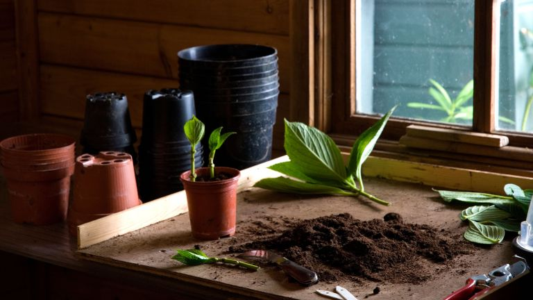 how to take cuttings from plants showing cuttings being potted on in a potting shed