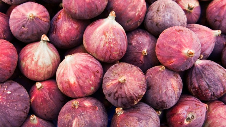 how to grow figs - common fig crops gathered together after being harvested