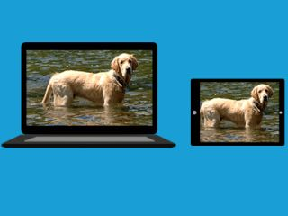 How to Resize Photos for Online Sharing - Best Resolution | Tom's Guide