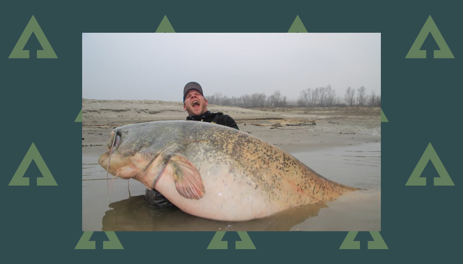 Huge catfish - full story of the 286 lb colossus