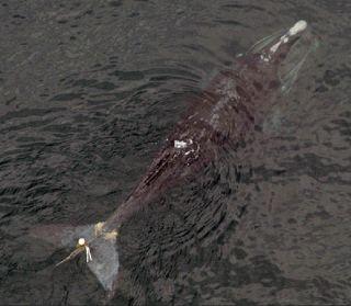 marine mammals, animal deaths