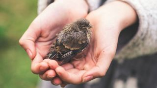 what to feed a baby bird
