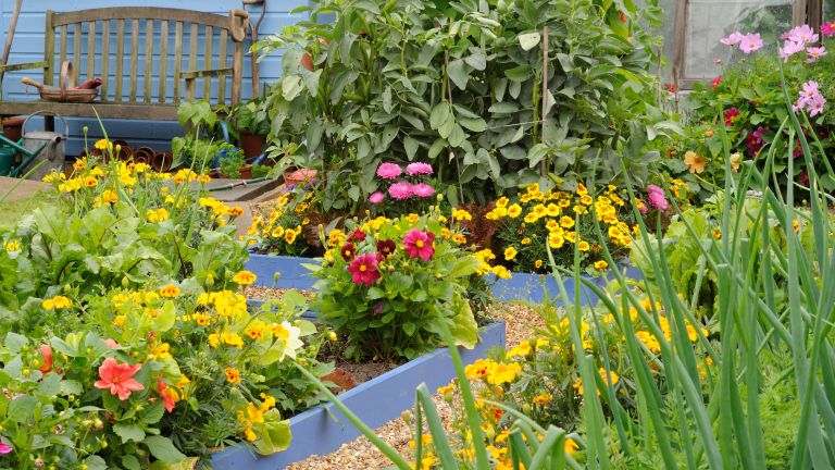a potager garden of mixed flowers and vegetables in raised beds