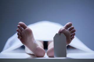 Human body, cadaver, human anatomical research