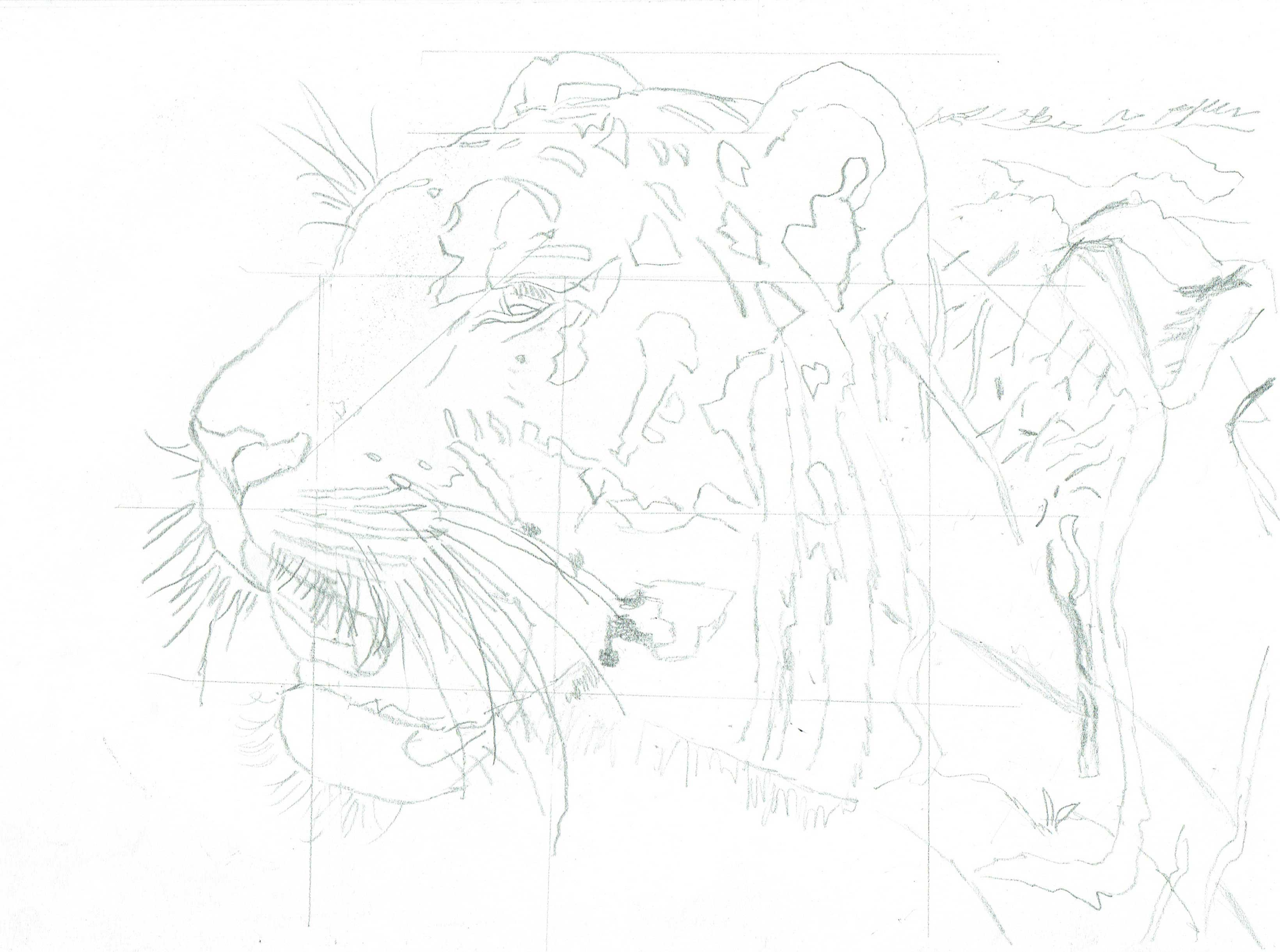 sketch of tiger