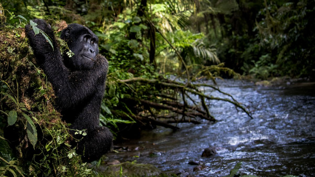 Stunning wildlife photography scoops top prize at Environmental Photography Award